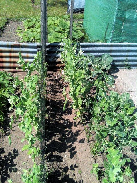 Plot Plants