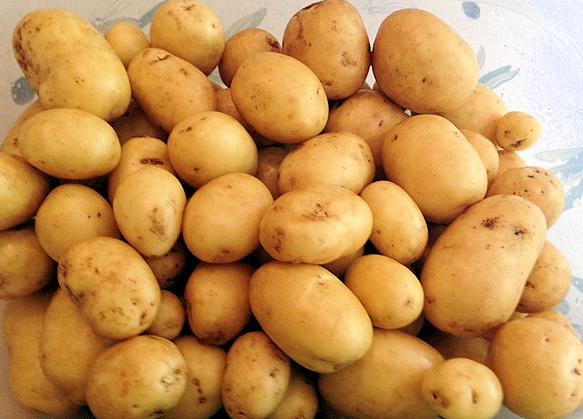 Plot Potatoes 1