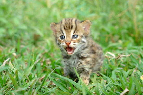 angry kitten