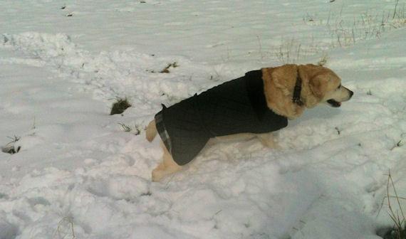 The dog enjoyed the snow…